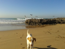beach dog photo bomb