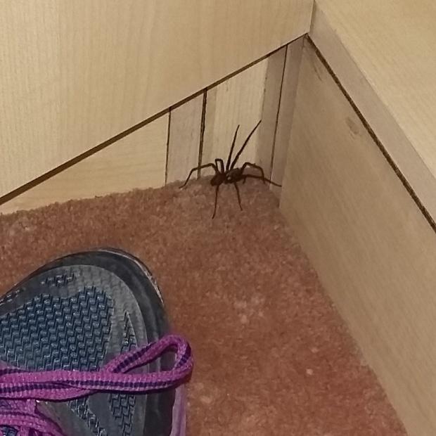 Spider 'friend' Toto